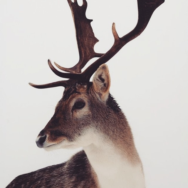 White Christmas loading... ❄️ #deer #christmas #happychristmas #natale #buonnatale #winter #mountain